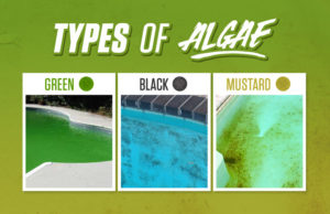 Algae_in_Pool