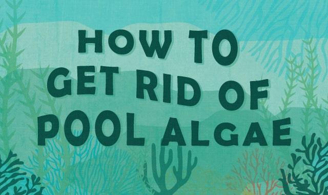Pool_Algae